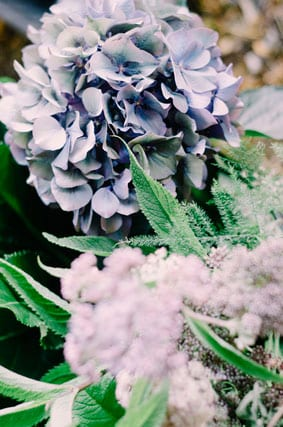 Hydrangea-blooms-for-our-Dark-Romance-story