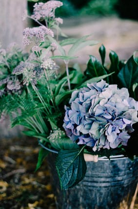 Hydrangea-for-our-Dark-Romance-story